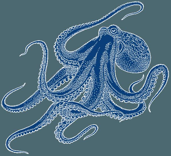 Der Tintenfisch als Symbol für Generalisten
