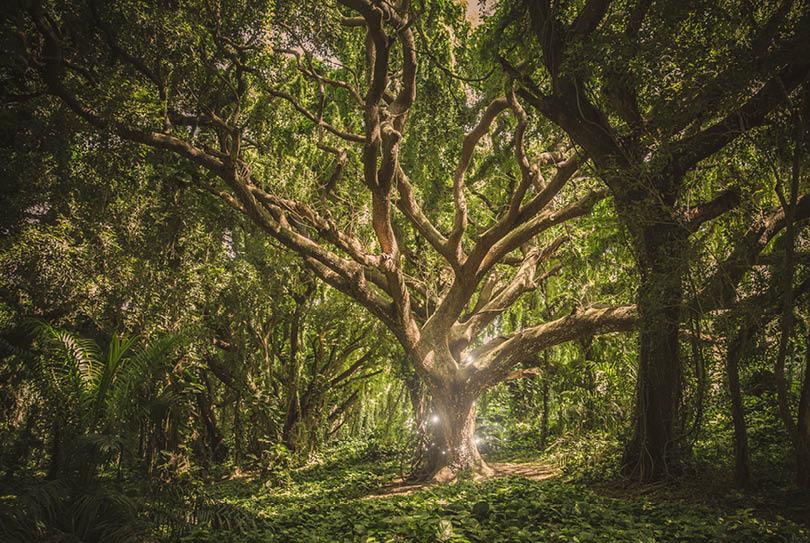 Marke ist magisch mit meinem Markenmodell, dem Magic Tree of Values